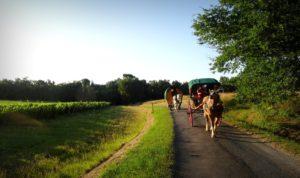roulotte, calèche, chevaux