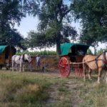 calèche, roulotte, chevaux