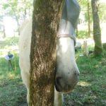 cheval, tronc, arbre
