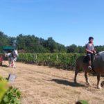 chevaux, attelage