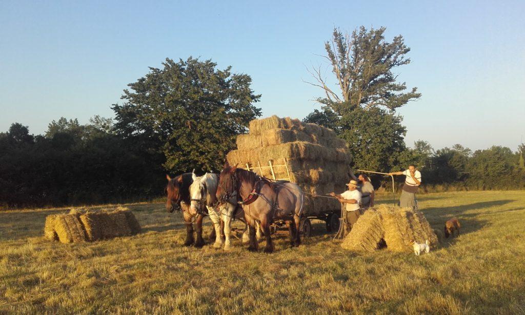 Les chevaux de MAnu DAvignon à l'oeuvre à Vautebis