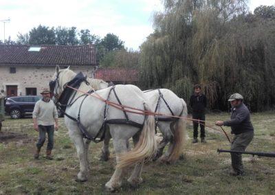 allez on recule les chevaux!